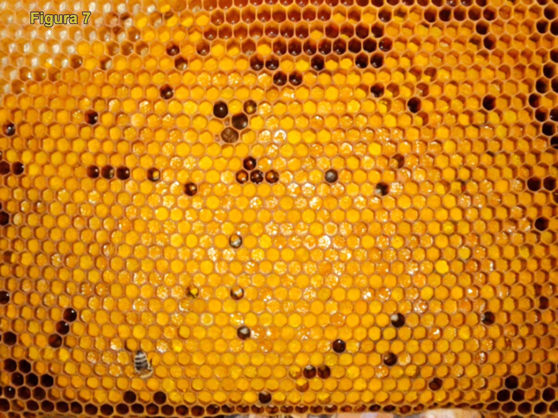 retete fig 7 Fagure cu polen