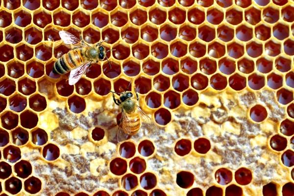 Reţete de hrană proteică pentru albine