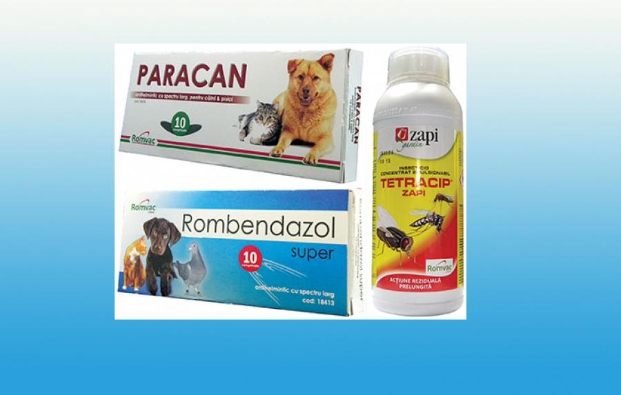 Babesiozele Boli Grave Provocate De Căpușe La Câini și