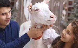 Eliminarea placentei la capre