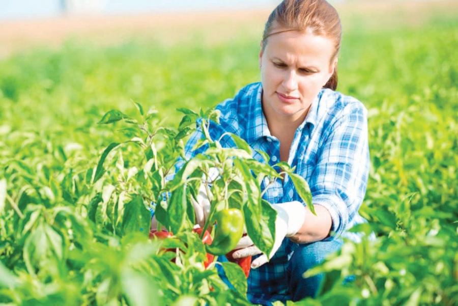 Femeie intalnire pentru agricultor