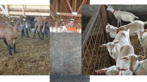 motive de pierdere în greutate la capre Modelul qvc pierde în greutate